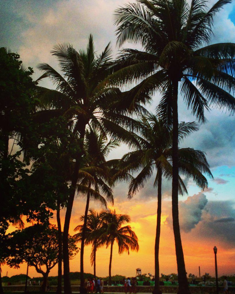 Palmenstrände in Süd-Florida