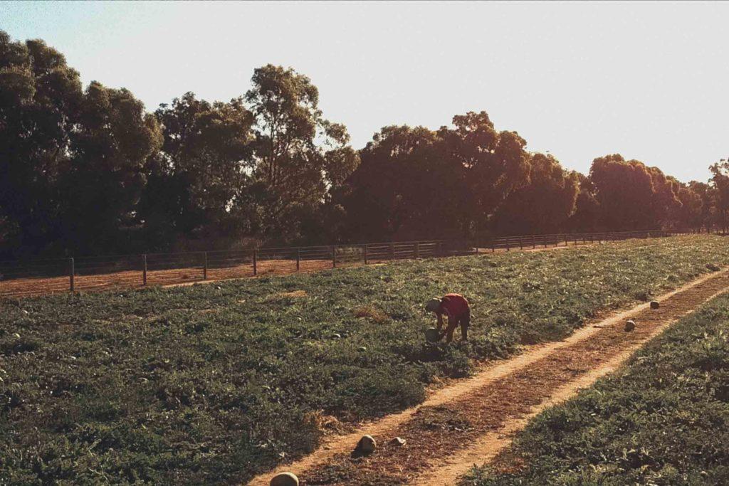 Adrian bei der Farmarbeit in Australien