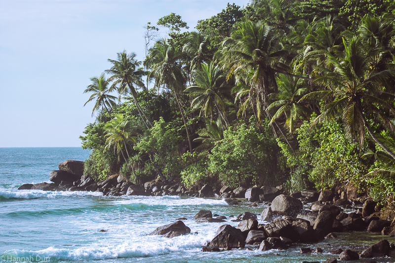 Schönster Palmen Strand Sri Lanka in Mirissa