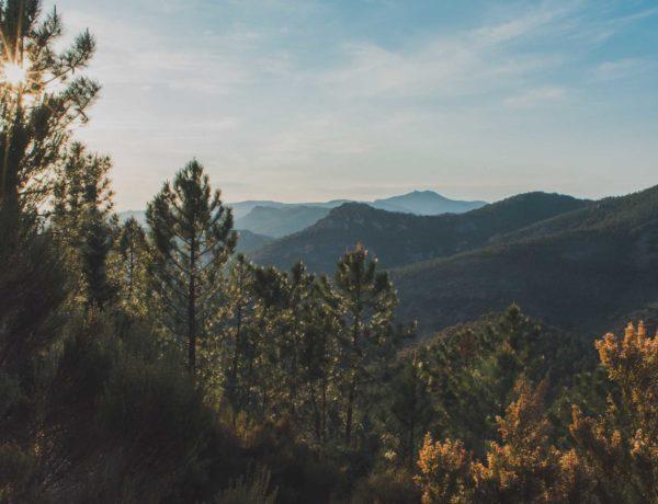 mehr Nachhaltigkeit im Alltag integrieren einfache Tipps