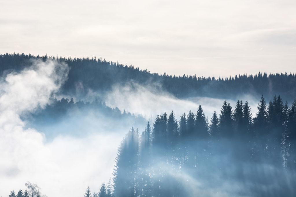 Bild: Achtsamkeit zur Stressbewältigung. Tannenwipfel im Schwarzwald im Nebel